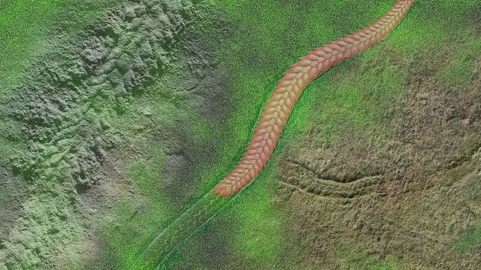 Yilingia spiciformis artist interpretation of trace and animal