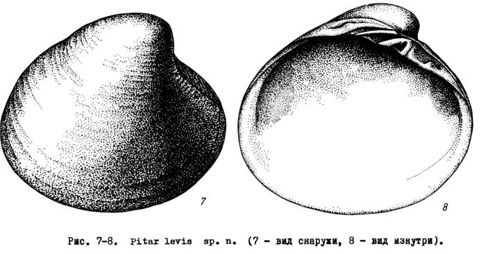 Pitar levis - original image