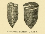 Textularia barrettii Jones & Parker, 1876