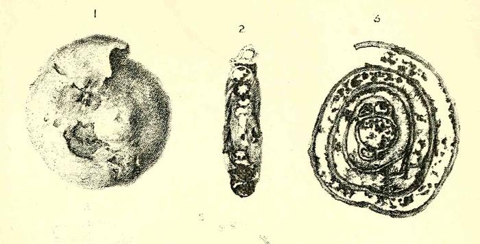 Cornuspira schlumbergi Howchin, 1895