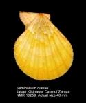 Semipallium dianae