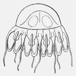 medusa drawing by Maas (1897)