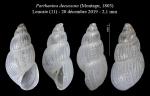 Parthenina decussata