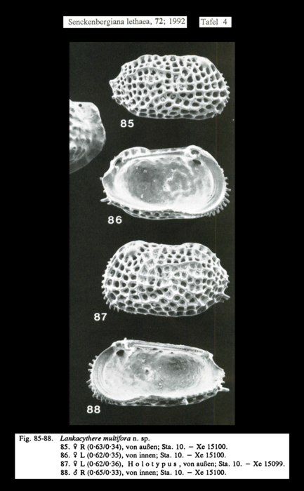 Lankacythere multiflora Mostafawi, 1992, Pl. 4, figs 85-88 0 from original description
