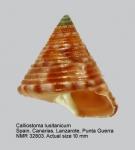 Calliostoma lusitanicum