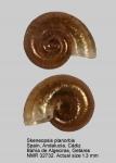 Skeneopsis planorbis