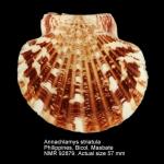 Annachlamys striatula