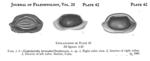 Glyptobairdia bermudezi Stephenson, 1946 from the original description