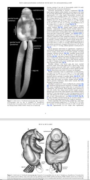 Neoalbionella dannytangi