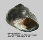 Diloma nigerrimum