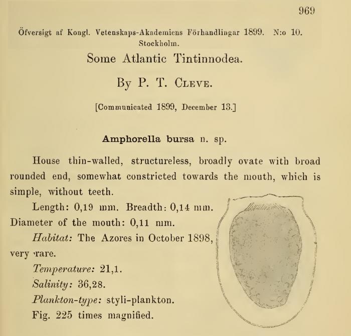 Description of Bursaopsis bursa as Amphorella bursa by Cleve (1899)