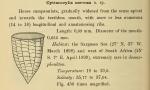 Original description of Epicancella nervosa was by Cleve (1899) as Cyttarocylis nervosa