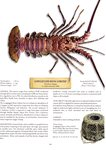 Longlegged Rock Lobster