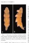 Enteropsis roscoffensis