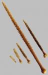 Ctenocidaris perrieri (primary spines)