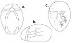 Anabrissus damesi (test)