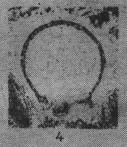 Eotuberitina talassica Poyarkov, 1961