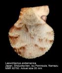 Laevichlamys andamanica