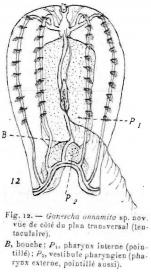 Ganesha_annamita_holotype