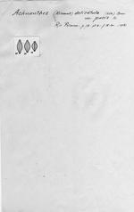 Achnanthes delicatula var. pacis
