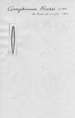 Gomphonema frickei