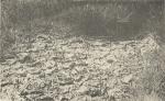 Massart (1908, foto 103)