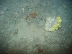sponge from 720 m deep