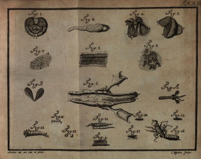 Sellius (1733, tabula 2 – zwart/wit)