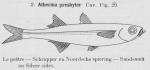 Atheriniformes