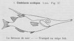 Gilson (1921, fig. 57)