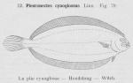Gilson (1921, fig. 79)