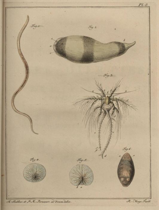 Slabber (1778, pl. 08)