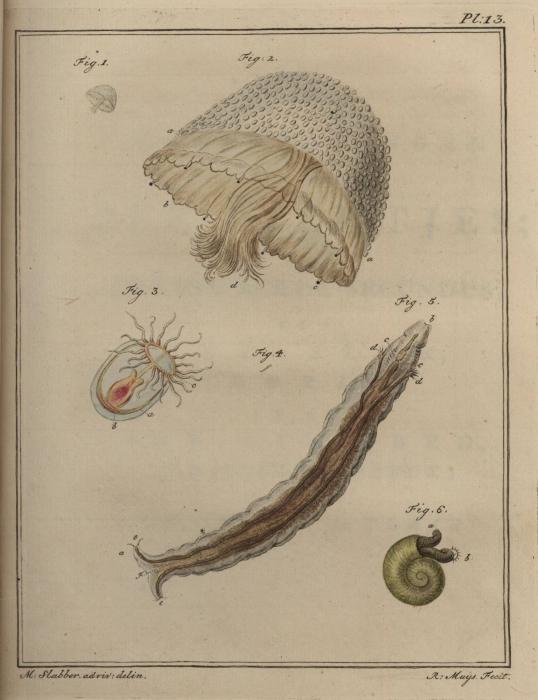 Slabber (1778, pl. 13)