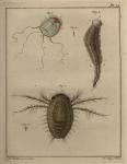 Slabber (1778, pl. 14)