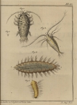 Slabber (1778, pl. 17)