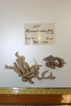 Holotype Halichondria reticulata Baer