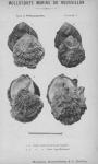 Bucquoy <i>et al.</i> (1887-1898, pl. 01)