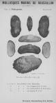 Bucquoy et al. (1887-1898, pl. 32)