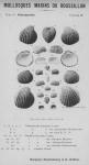 Bucquoy et al. (1887-1898, pl. 38)