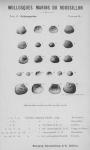 Bucquoy et al. (1887-1898, pl. 45)