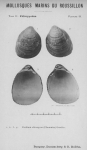 Bucquoy et al. (1887-1898, pl. 49)
