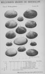 Bucquoy et al. (1887-1898, pl. 64)