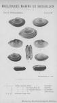 Bucquoy <i>et al.</i> (1887-1898, pl. 92)