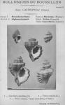 Bucquoy et al. (1882-1886, pl. 05)