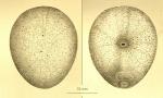 SCAR-MarBIN Species