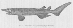 Poll (1947, fig. 045)