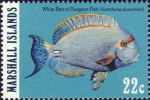 Acanthurus dussumieri