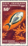 Acanthurus sohal
