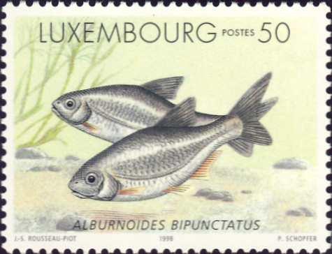 Alburnoides bipunctatus
