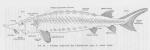 Pisces (fish)